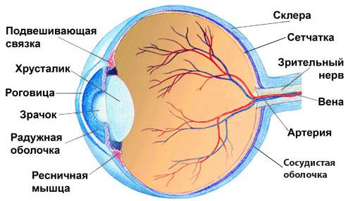 Симптомы ушиба глаза