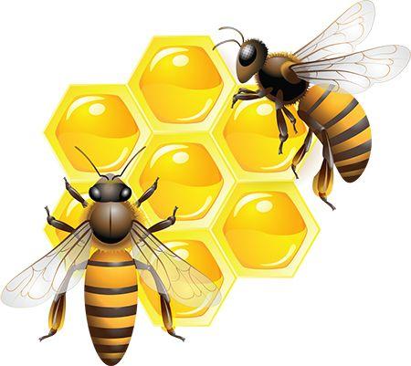 мед компоненты