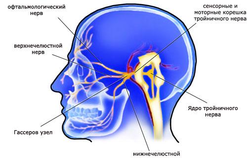 Строение тройничного нерва, фото
