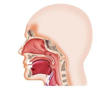 Полость носа
