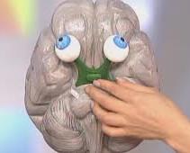 Симптомы сдавления окружающих тканей опухолью гипофиза