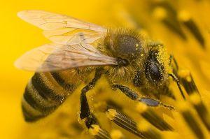 лечение пчелами