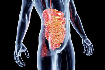 сумамед распадается в печени и выводится через кишечник