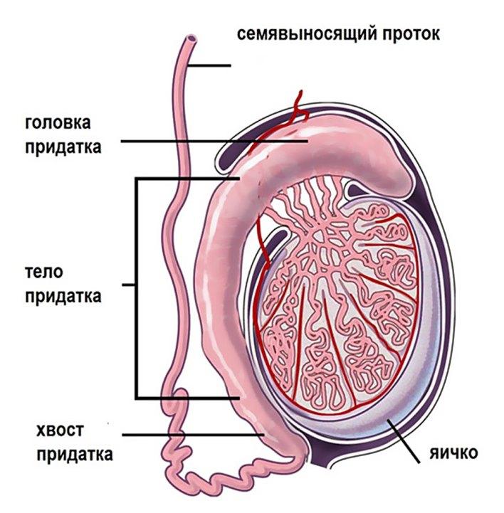 Ущільнення на яєчку у чоловіків: причини і лікування