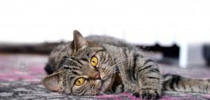 qtcat bellatrix foto Anna Carlsson