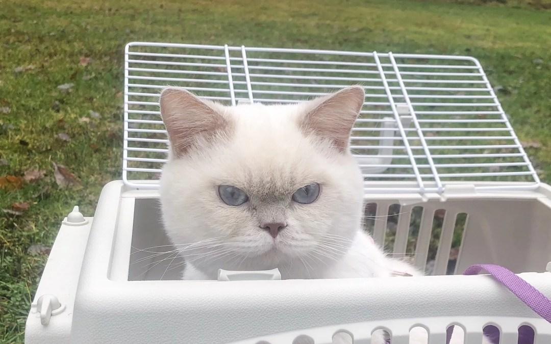 Guide: Att tänka på när du väljer kattbur
