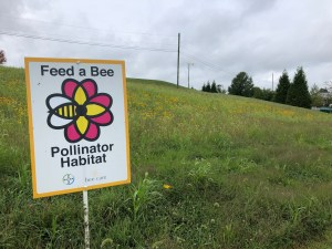 Pollinator meadow - first season