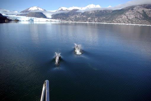 Delfine voraus zum Gletscher Amalia