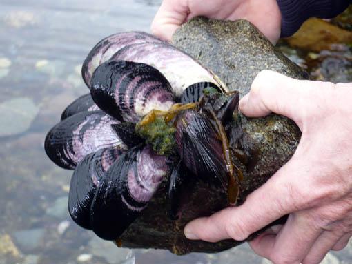 uns bluetet das Herz beim Anblick der leider vergifteten Muscheln