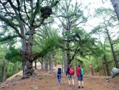 11 Indrukwekkende bomen