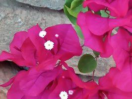 24 En zo maar wat mooie bloemen