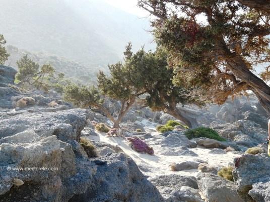The European Path E4 runs through here.... Kedrodasos - the beach for nature lovers
