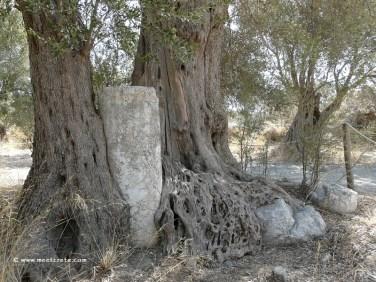 Ancient Gortyn – Gortyn Law Codes – Apostle Saint Titus Ancient Gortyn – Gortyn Law Codes – Apostle Saint Titus
