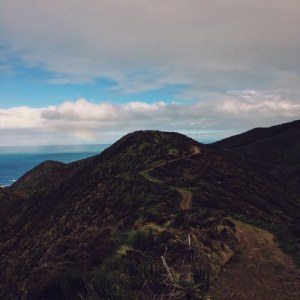 A trail in the hills near Wellington, New Zealand