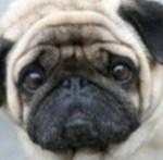 困った犬顔