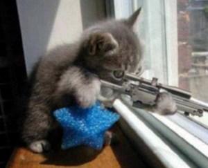 狙い撃ち猫