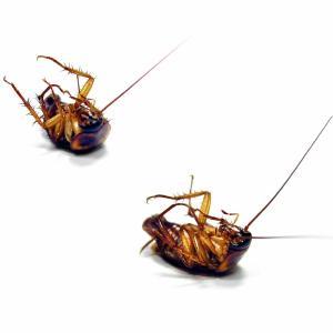 kakkerlakken gedood door een ongediertebestrijder