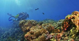 Où faire de la plongée sur l'île de la Réunion