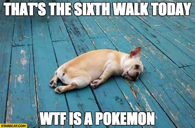 thats-the-sixth-walk-today-wtf-is-a-pokemon-tired-dog