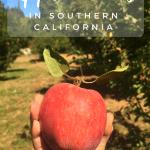 Fall Bucket List – Apple Picking