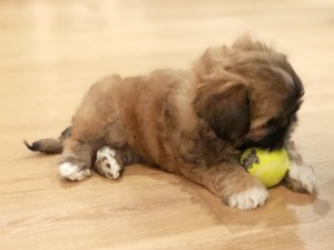 New Puppy Essentials - What do you need for your new puppy? Read on for our list of essentials for what to buy when you get a dog!