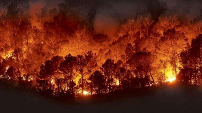 There are already 11 active forest fires in Quintana Roo