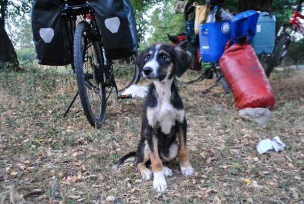 small dog standing in front of touring bicycles in Azerbaijan