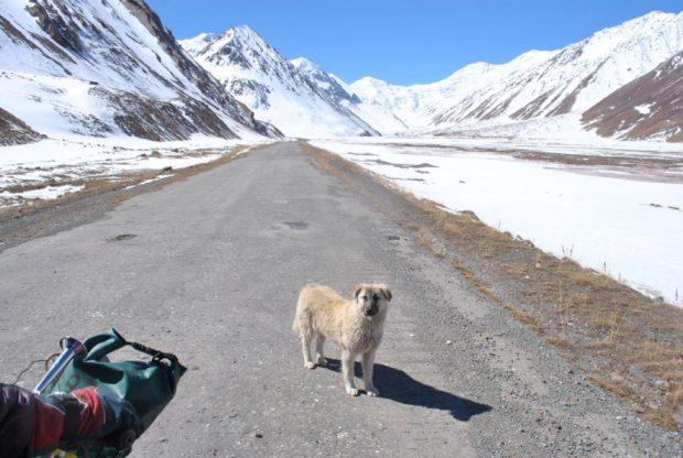 small dog in the snowy mountains between Kyrgyzstan and Tajikistan