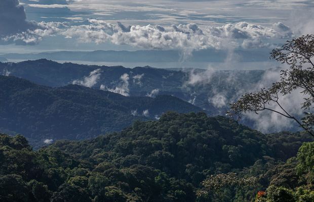sparse clouds hang over dense forest canopies of Nyungwe Reserve in Rwanda