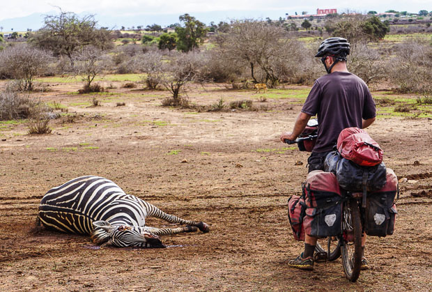 evan on touring bicycle beside road kill zebra in kenya
