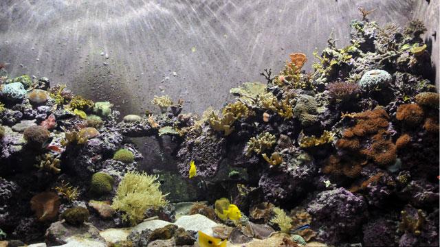Coral Reef - Tennessee Aquarium