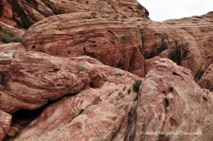 DSC_9139-Red-Rock-Canyon