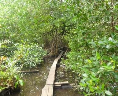 Sidewalk through the ... marsh? jungle? wilderness.