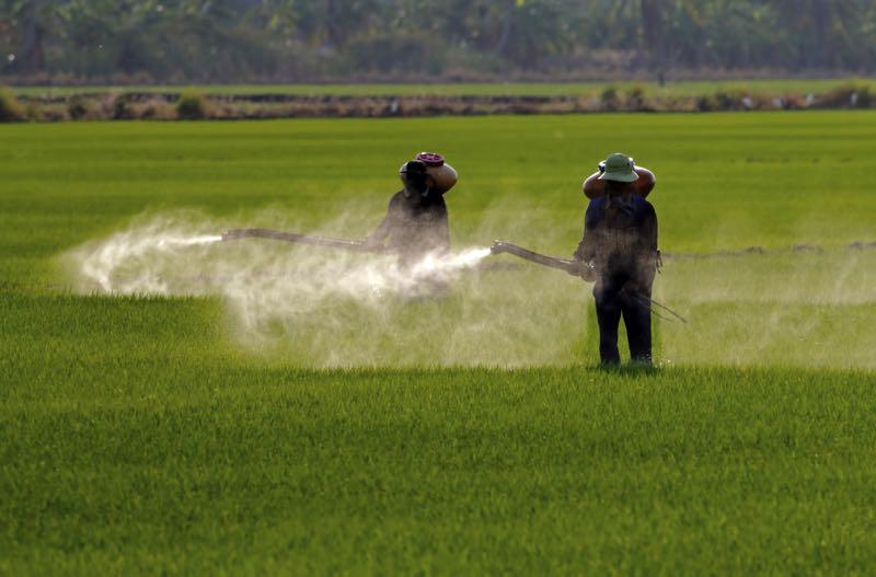 Image result for gmo spray