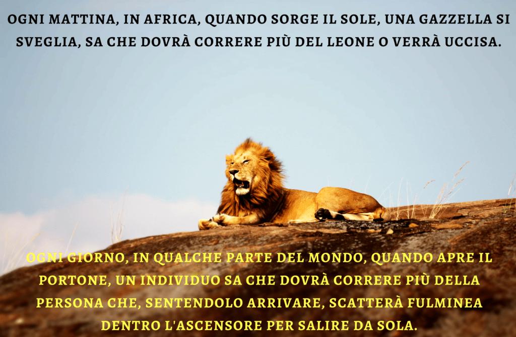 Il leone, la gazzella e l'ascensore