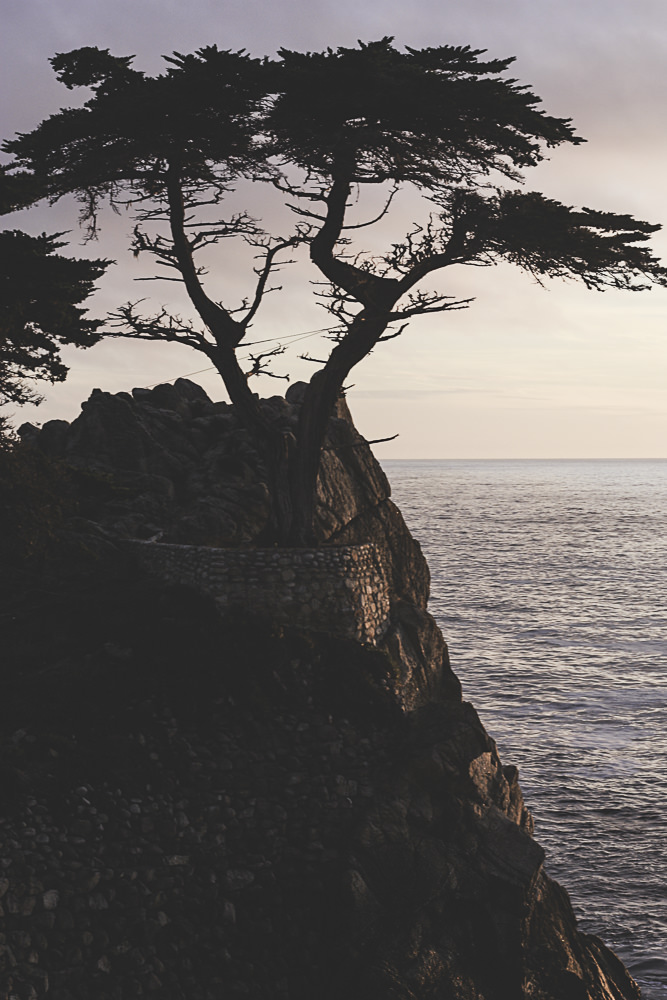 monterey and real life | meg marie Wallace | Monterey Hotel | Carmel