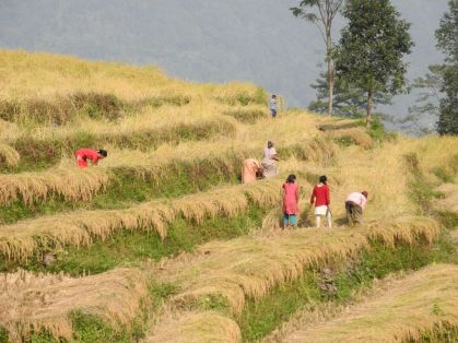 Terracing abounds in Sikkim