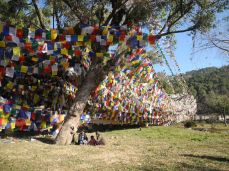 Prayer flags on the bank of the sacred lake, Tso Pema