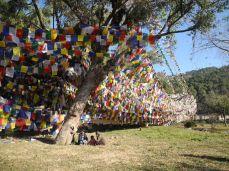 Prayer flags on the bank of the sacred lake, Tso Pema