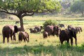 Elephants, elephants, and more elephants