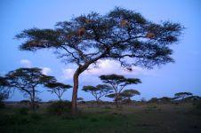Tanzanian Trip #2 454