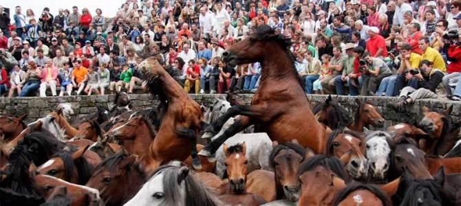 A Rapa das Bestas espera acoger hasta 30.000 personas en su 450 aniversario