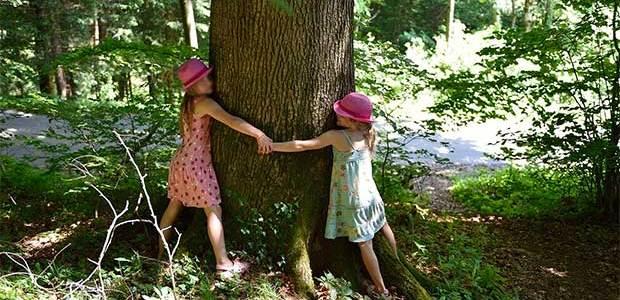 Bosques terapéuticos para una «conexión íntima» con la naturaleza
