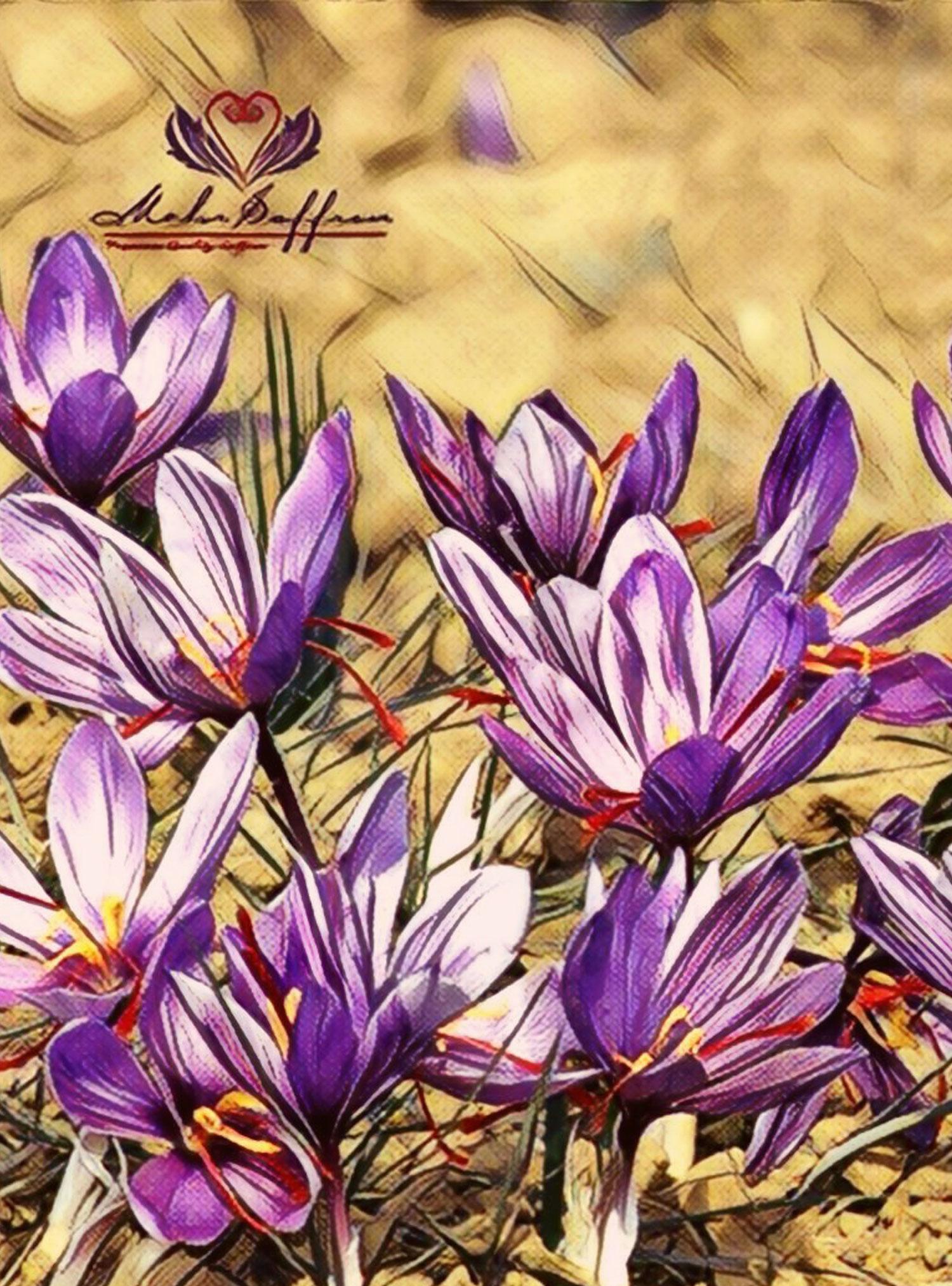Mehr Saffron, Highest Quality Saffron Brand in the World