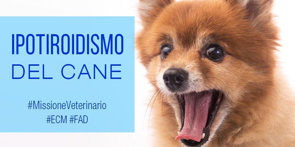 Medical-Evidence-Ipotiroidismo-Cane