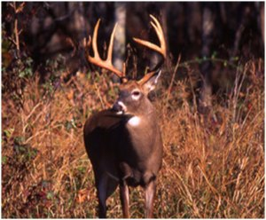 Hunting in Meigs County