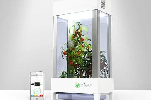 niwa armoire hydroponique connectee pour faire pousser a l interieur