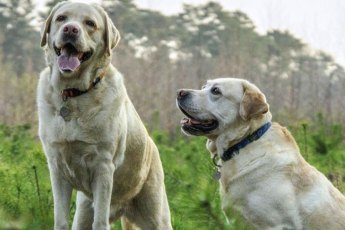 Häufige-Fragen-zu-artgerechter-Hundehaltung