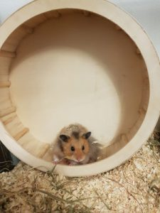 Hamster-Vorkehrungen-vor-Einzug