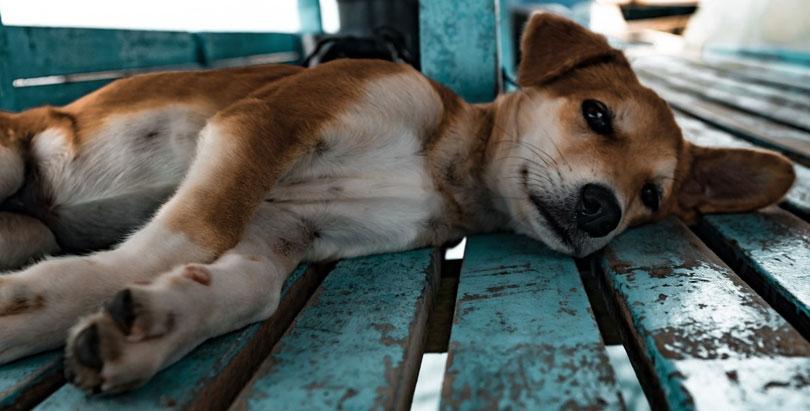 Hund-aus-dem-Tierheim-adoptieren